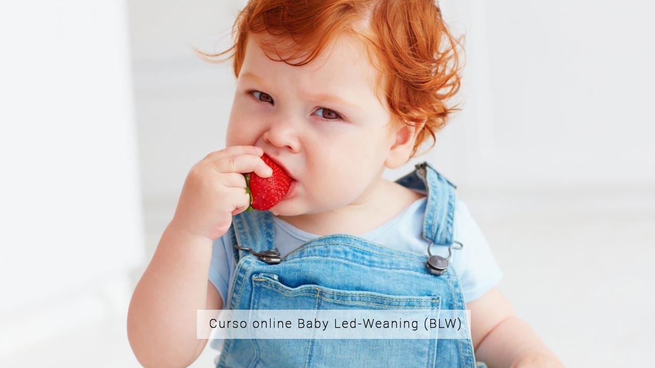 Baby Led-Weaning (BLW)